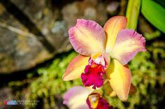 Stefanodav's Shot-Blog: This one is for Me... #stefanodav #kauai #hawaii #iamnikon #nikonphotography #travel #travelphotography #blogger #beutifulplace #placetovisit #usa #fiore #fiori #flower #flowers #beautiful #nature #color