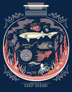 Terrarium, Ecosystem In A Bottle, Print Image, Illustration Inspiration, Science Illustration, Botanical Illustration, Bottom Of The Ocean, Angler Fish, Nursing Notes