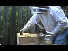 Feeding Our Homemade Pollen Patties To Our Bees - YouTube