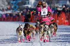 13 stunning photos of people racing through Alaska in the Iditarod - March 2, 2017:  AROUND 50 MUSHERS ENTER THE RACE EACH YEAR. - Only experienced mushers are allowed to compete in the Iditarod - mushers must participate in three smaller races in order to qualify - Only experienced mushers are allowed to compete in the Iditarod - mushers must participate in three smaller races in order to qualify.