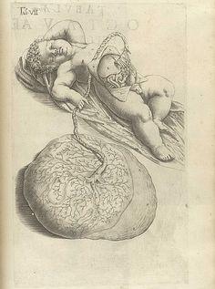From Speigel, Adriaan van de; and Casseri, Giulio Cesare. De formato foetu liber singularis. (Padua: Io. Bap. de Martinis & Livius Pasquatus, [1626]). Illustrator: Odoardo Fialetti (1573-1638). Engraver: Francesco Valesio (b. ca. 1560). See also http://pinterest.com/pin/215398794648137125/