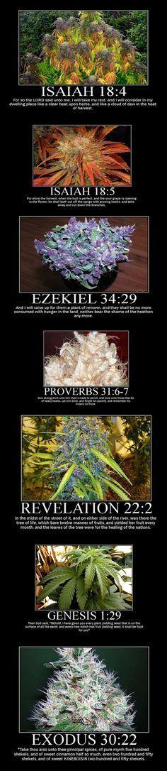 In the Bible (hemp, marijuana, knh-bsn, kaneh-bosm, kananabosm, cannabis)