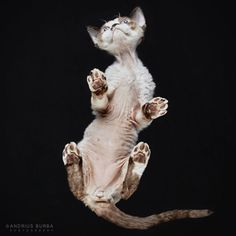 Photographer Shows Us That There Are No Bad Angles On A Cat | 5 | - Three Million Dogs
