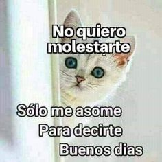 Good Morning In Spanish, Good Morning Funny, Good Morning Love, Good Morning Quotes, Morning Gif, Cute Spanish Quotes, Funny Spanish Memes, Morning Greetings Quotes, Morning Messages