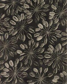 sugarmeows:  Silaum Silaus (gelatin silver print, 1920s) – Karl Blossfeldt (German, 1865–1932)