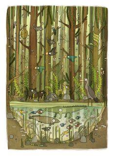 by Brendan Kearney : Mangrove Swamp