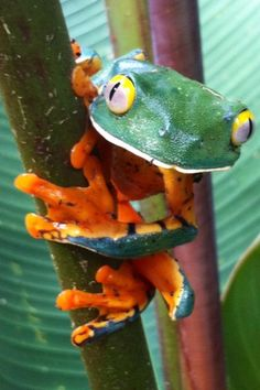 Hey everybody! Just hanging out today. Visit this page for information and help planning a custom Costa Rican vacation!