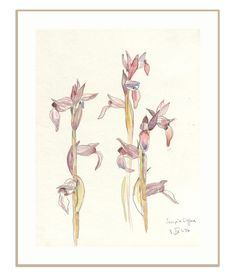 Wild flowers sketch - botanical PRINT of wild orchideas drawing - watercolor and pencil drawing on my travel journal by Catalina by CATILUSTRE on Etsy