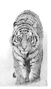 Pencil Drawings Of Animals, Art, Animal Pencil Drawings, Kunst, Art Education, Artworks