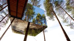 Treehouse Hotel Tourism, Sweden - Next Trip Tourism