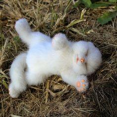 Ну ооочень устал которебенок. До подушки не дошел#котики #котенок #сплюшка #сухоеваляние #сувенир #cat #kitty