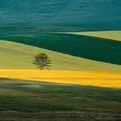 Franco Fontana: A retrospective of the Italian landscape photographers works from the last 40 years.   Saint-Petersburg, Rosphoto  http://www.rosphoto.org/en/list-exhibitions/details/154