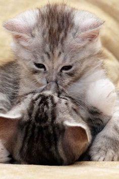I kiss you!