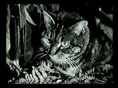 Shadow of the Cat (1961) Over 2000 Free FULL Movies and Television - Anton Pictures  www.YouTube.com/AntonPictures  Did you REPINED your favourite FREE MOVIE?  Follow this board and have a great Entertainment:  http://pinterest.com/antonpictures/watch-full-movies-for-free/