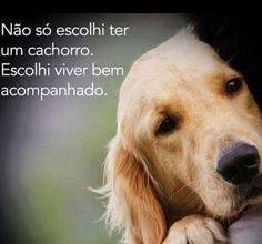 SEMPRE!!! ❤️❤️❤️ #cachorroétudodebom #amocachorro #amoanimais #cachorro #golden Pets 3, Pet Dogs, Dog Cat, Animals And Pets, Baby Animals, Cute Animals, Love Pet, I Love Dogs, Dachshund