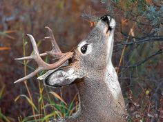 In a year with more than its share of unusual climatic and environmental events, late-season deer hunting is going to require alternative strategies.