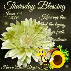 Have a Blessed Day! Happy Thursday Morning, Good Morning Cat, Good Morning God Quotes, Good Thursday, Thursday Humor, Thursday Quotes, Its Friday Quotes, Wednesday, Thursday Greetings