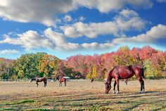 You need to decide what your focus is for your equine boarding and/or training facility. Horse Shed, Indoor Arena, Horse Property, Health Programs, Boarders, Above And Beyond, Horse Care, Autumn, Fall