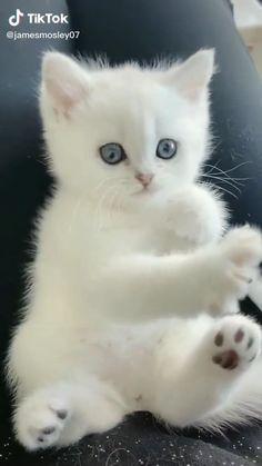Cute Baby Cats, Cute Little Kittens, Cute Kitten Gif, Adorable Kittens, Super Cute Animals, Cute Little Animals, Cute Funny Animals, Cute Animal Videos, Cute Animal Pictures
