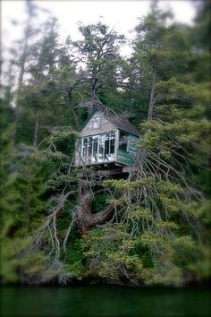tree house lake