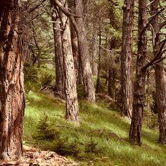 #naturelovers #traveller #mood #natureaddict  #wood #trip  #authentic #adventure #botanical #nature  #allnatureshots #august #mushrooms #wild #outdoors #visualdiary #sweetsummer #travel #hiking #stayandwander #summerlove #summer #woodland #rocks #mountain #flowers #mountains  #summervibes #nikon #photography Visual Diary, Nikon Photography, Summer Of Love, Summer Vibes, Mushrooms, Woodland, Rocks, Hiking, Outdoors