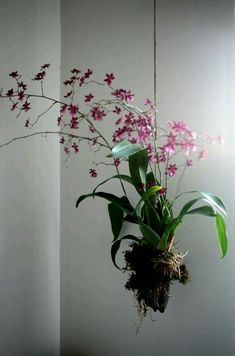 Delicadas orquídeas!