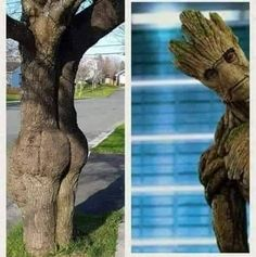"""Tagged with funny, tree lust; """"I am Groot"""" Jeremy Renner, Avengers Memes, Marvel Memes, Memes Humor, Humor Quotes, Chris Hemsworth, Funny Images, Funny Pictures, School Pictures"""