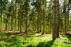 http://upload.wikimedia.org/wikipedia/commons/1/1f/England_-_English_Summer_Forest_(7183015516).jpg