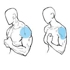 筋肉 女性 描き方 イラスト  Drawing muscular woman muscles illustration