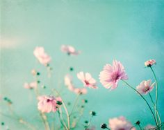 "Flower Photography - aqua blue pink wall art floral photo pastel decor pale spring nature print white teal 8x10 Photograph, ""Beauty Upon Us"" by CarolynCochrane on Etsy https://www.etsy.com/uk/listing/88351140/flower-photography-aqua-blue-pink-wall"