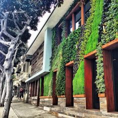 Living Wall at Seven 4 One Hotel in Laguna Beach, CA