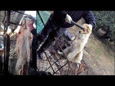 LG :犬猫のL惨殺禁止に協力を! Help us to end the abhorrent cruelty and suffering of cats and dogs in your country!    以下はLGグループ宛ての請願書です。   LGグループ殿   LG社は、世界中に多くの支店と子会社をもつ韓国トップクラスの企業です。御社は海外市場と輸出に重きを置いており、顧客に対して御社と母国の前向きなイメージを維持することは非常に重要なことです。   しかし、数十億ドルを生み出す韓国の犬猫肉の産業とその残虐さは、今や世界中で常識です。   日常的に行われているこのおぞま...