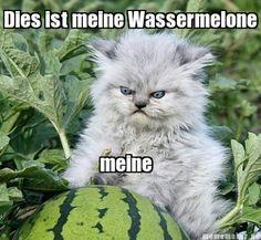 German kitty. Too funny!