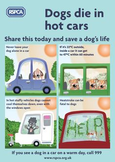 Dogs die in hot cars - share this today and save a dogs life. If you see a dog in a car on a warm day, call 999.