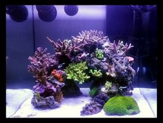 October NTOTM - Toofrigginswt's Rimless Cube - Reef Central Online Community