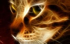 http://www.fanpop.com/clubs/cats/images/16096428/title/beautiful-cat-wallpaper
