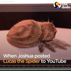 23 Best Lucas The Cutest Spider In The World Images Lucas The