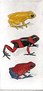 John Furches artist : Poison Dart Frogs II watercolored etchings