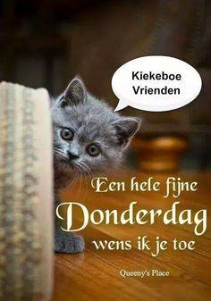 Donderdag Good Day, Good Night, Good Morning, Animals And Pets, Hug, Thursday, Funny, Nice, Good Thursday