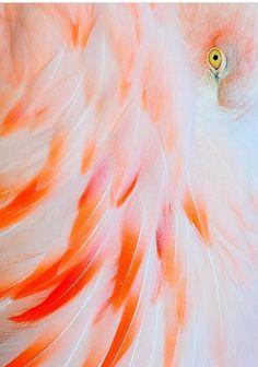 Flamingo. ❣Julianne McPeters❣ no pin limits
