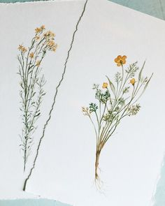 Had so much fun painting these desert weeds in New Mexico. Honestly though—they are too pretty to call weeds. I'll just call them free-willed desert flowers. I'll be updating my shop with a few of these next month! Botanical Line Drawing, Botanical Drawings, Botanical Art, Painting & Drawing, Watercolor Paintings, Watercolors, Illustration Botanique, Desert Flowers, Southwest Art