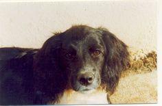 Meu cão Bethoveen (2003/2013)