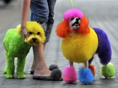 Neon Hair Dye For Dogs ---  Extreme Dog Grooming  http://hdcspa.com/