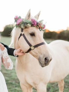 Jewel Toned Edgy Boho Wedding Ideas - Pretty horse + flower crown ♥ Acquiring The Proper Horses Pretty Animals, Cute Baby Animals, Farm Animals, Animals Beautiful, Animals And Pets, Funny Animals, Most Beautiful Horses, Funny Dogs, All The Pretty Horses