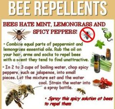 As far as possible, this post will concentrate on pest control tips that would assist keep away as much pests as you can. Some of the advises provided here will deal on specific pests but some may … Lemongrass Essential Oil, Doterra Essential Oils, Keep Bees Away, Bee Spray, Getting Rid Of Bees, Ground Bees, Bees And Wasps, Mosquitos, Insect Repellent