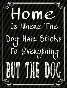 Home Where The Dog 9 - Funny Dog Quotes - Home Where The Dog 9 x 12 Metal Parking Sign The post Home Where The Dog 9 appeared first on Gag Dad. Dog Quotes Funny, Funny Dogs, Funny Animals, Funny Memes, Diy Funny, Boxer Quotes, Chihuahua Quotes, Rescue Dog Quotes, Pet Quotes Dog