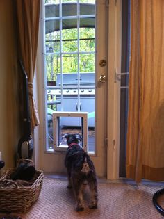 Do you want a dog door for sliding glass door and don't think it's possible to find one that doesn't restrict access or is not leaky and drafty. Sliding Glass Dog Door, Sliding Patio Doors, Glass Doors, Front Door Paint Colors, Painted Front Doors, Dog Door Insert, Door Design Images, Front Door Makeover, Pet Door