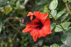 Butterfly House - Vienna Butterfly House, Vienna, My Photos, Plants, Plant, Planets