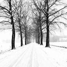 Lingebos, februari 2013 Winter Road, Trees, Seasons, Nature, Outdoor, Outdoors, Naturaleza, Tree Structure, Seasons Of The Year