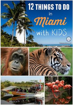 Looking for fun things to do in Miami with kids? Check out this list of must visit places to take your kids while traveling with kids in South Florida.